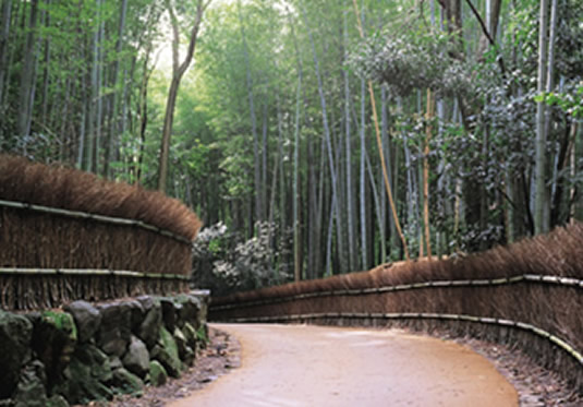 Chikurin-no-Michi (Path of Bamboo)